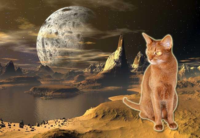 gatos alienigenas