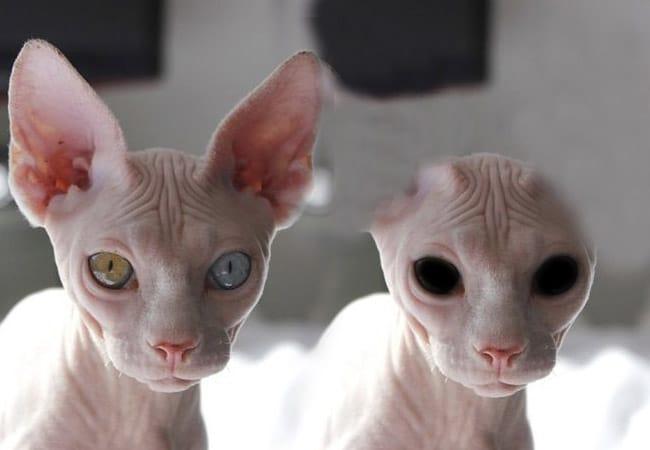 gatos extraterrestres